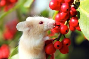Lucky Berries by Spilled-Sunlight