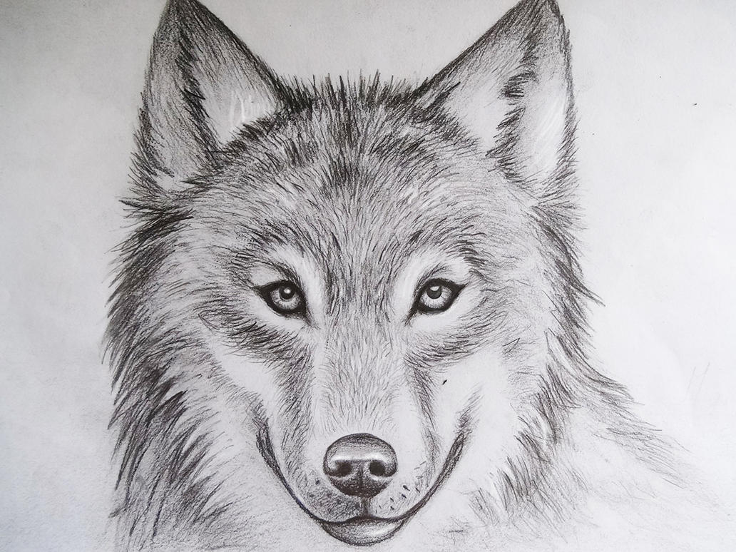 Wolf II by MCorderrour...