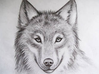 Wolf II by MCorderroure