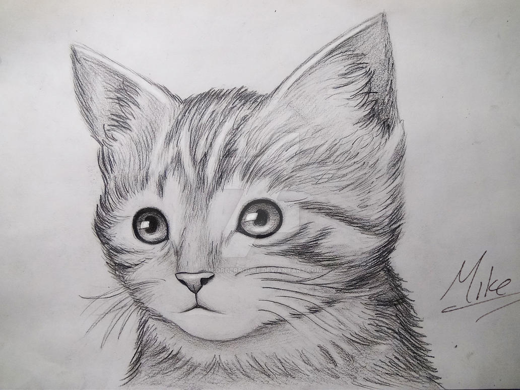 cute kitty drawing by mcorderroure on deviantart