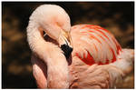 Flamingo 3 by RomRom53