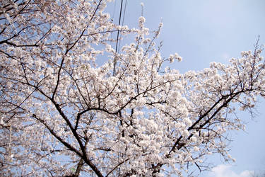 Spring by envyinwondrland