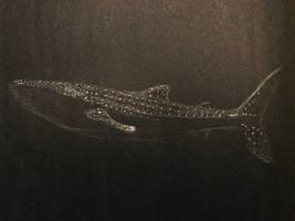 White Pencil Whale Shark by AquaticJM