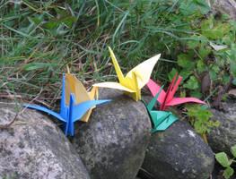 5 Cranes on rocks