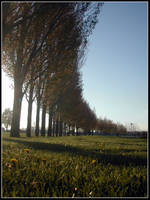 Curving Nature by bdusen