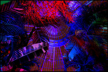 Night Lights, Part 5: Neon Palms by bdusen