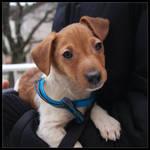 My New Puppy : Buddy