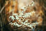 Winter moment by olaciaa