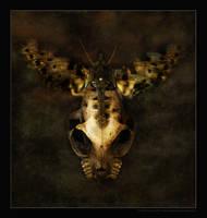 Skullterfly by myndsnare