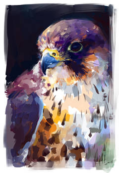 Lanner Falcon by Aucifiel