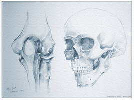 Study - Elbow vs Skull by Aucifiel