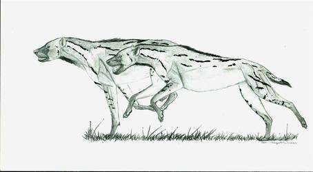 Cheetah hyena - chasmaporthetes