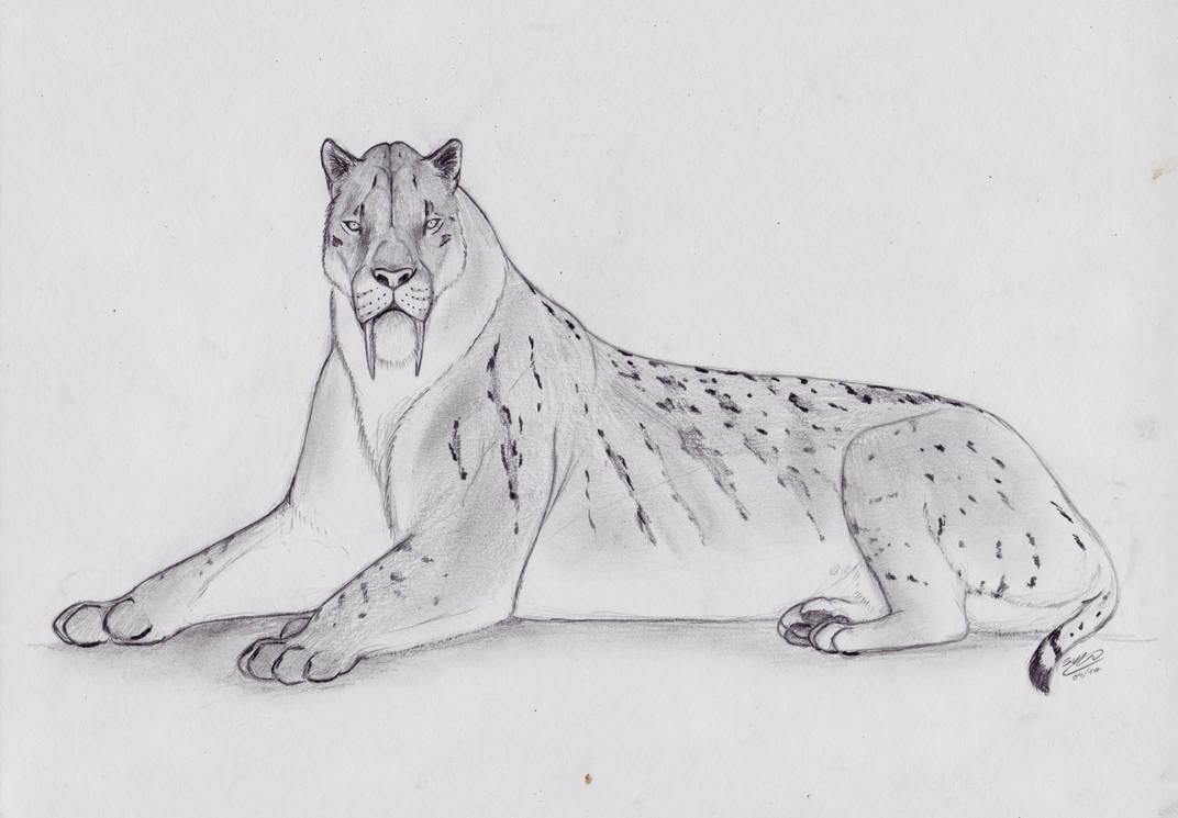 Reclining Giant - Smilodon populator.