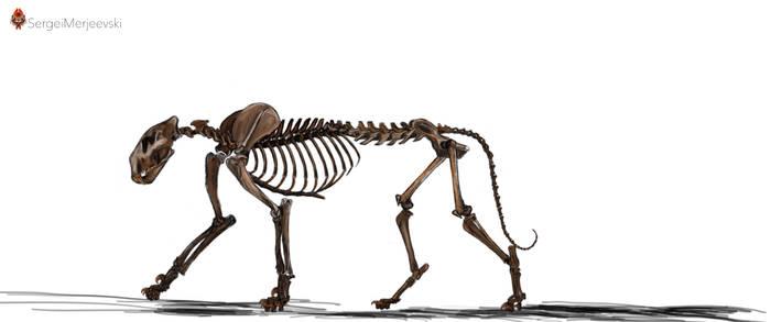 Panthera (Leo) atrox. Skeletal.