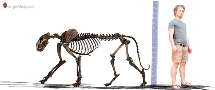 Panthera (Leo) atrox.