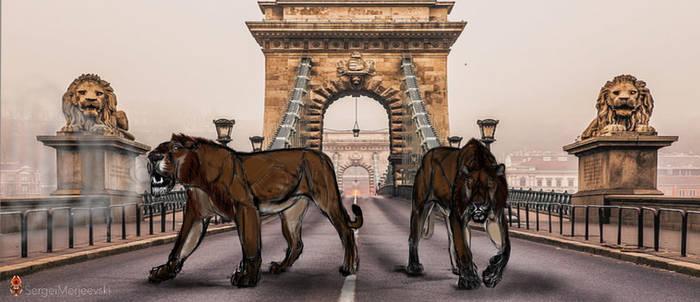 Thunder Twins, Enter Budapest