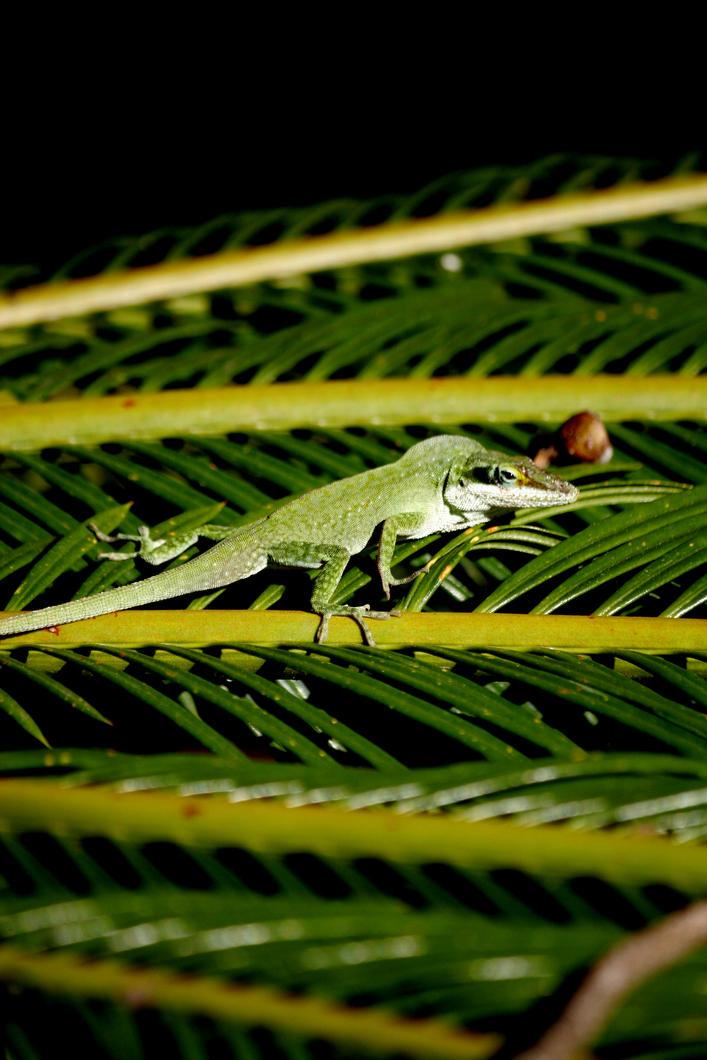 Green Lizard by TinyCueCard