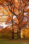 Autumn Wood I