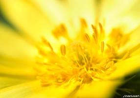 Flower 04 by Mariusart