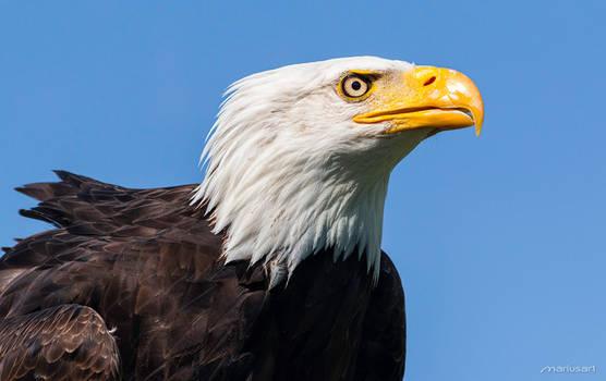 Where eagles stare