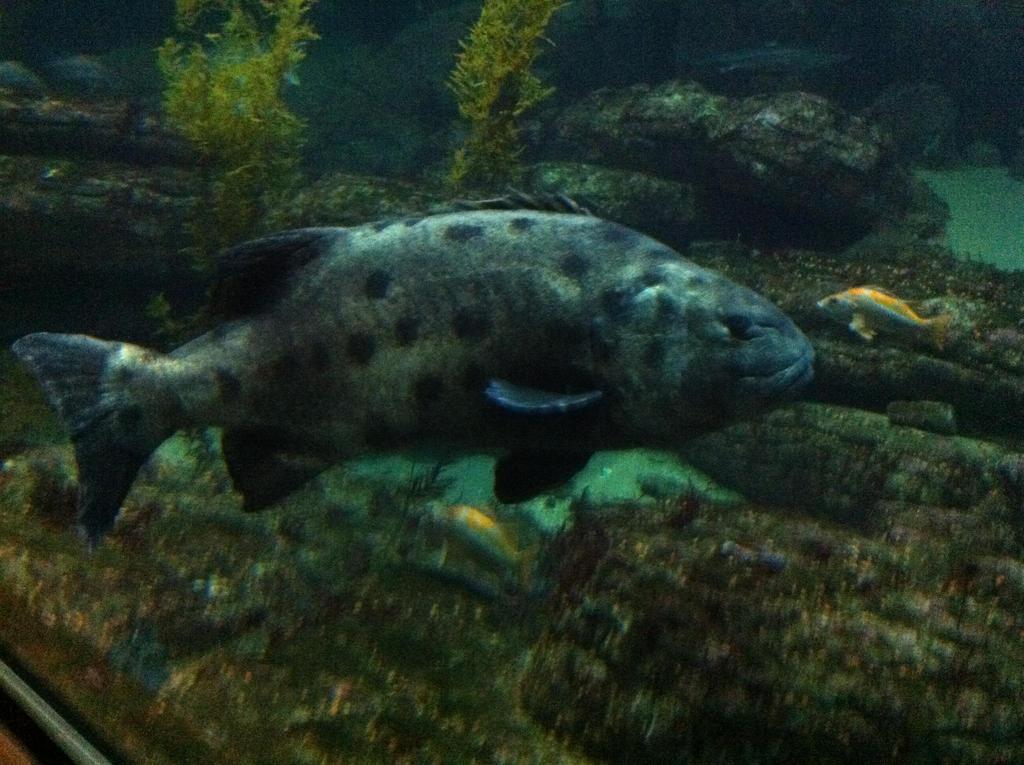 Monterey Bay Aquarium Harbor Creatures 3 By