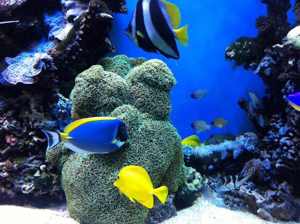Monterey Bay Aquarium The Reef 2 By Dreamstarthewarrior