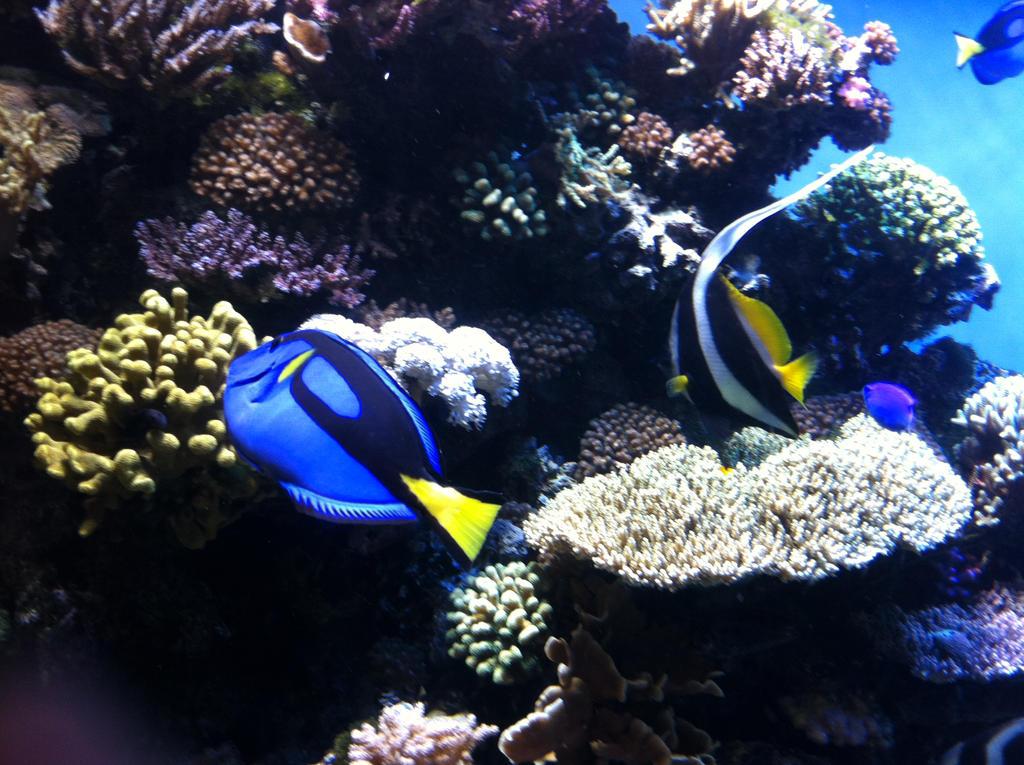 Monterey Bay Aquarium The Reef 11 By Dreamstarthewarrior