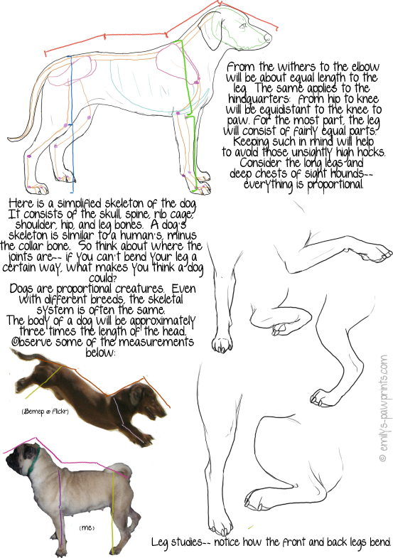 Dog proportions tutorial by dalmatianluver on DeviantArt
