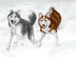 Watch out where the Huskies go by mx-mouse