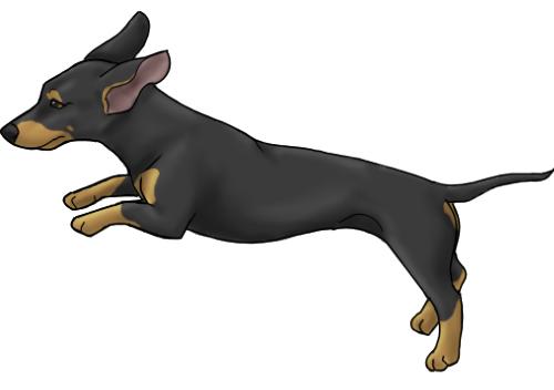 dachshund spirit dog gif