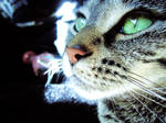 My Pussy Cat