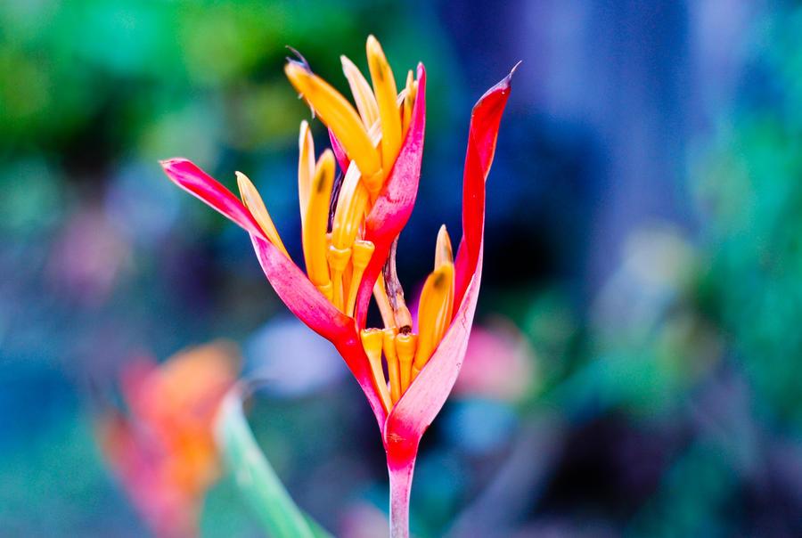 Flower Power [RE-Sub] by ideletemymind