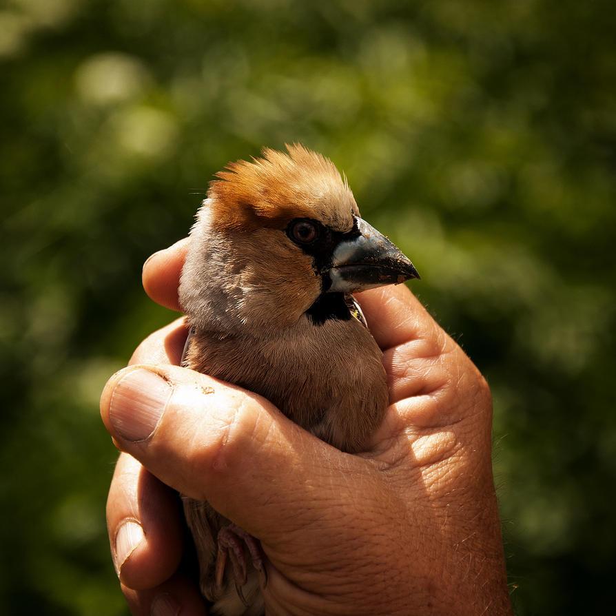 angry bird by serdarayyildiz