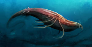 bugwhale