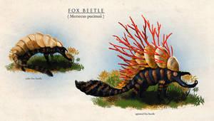 fox beetle