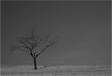 lonely VI by kortos