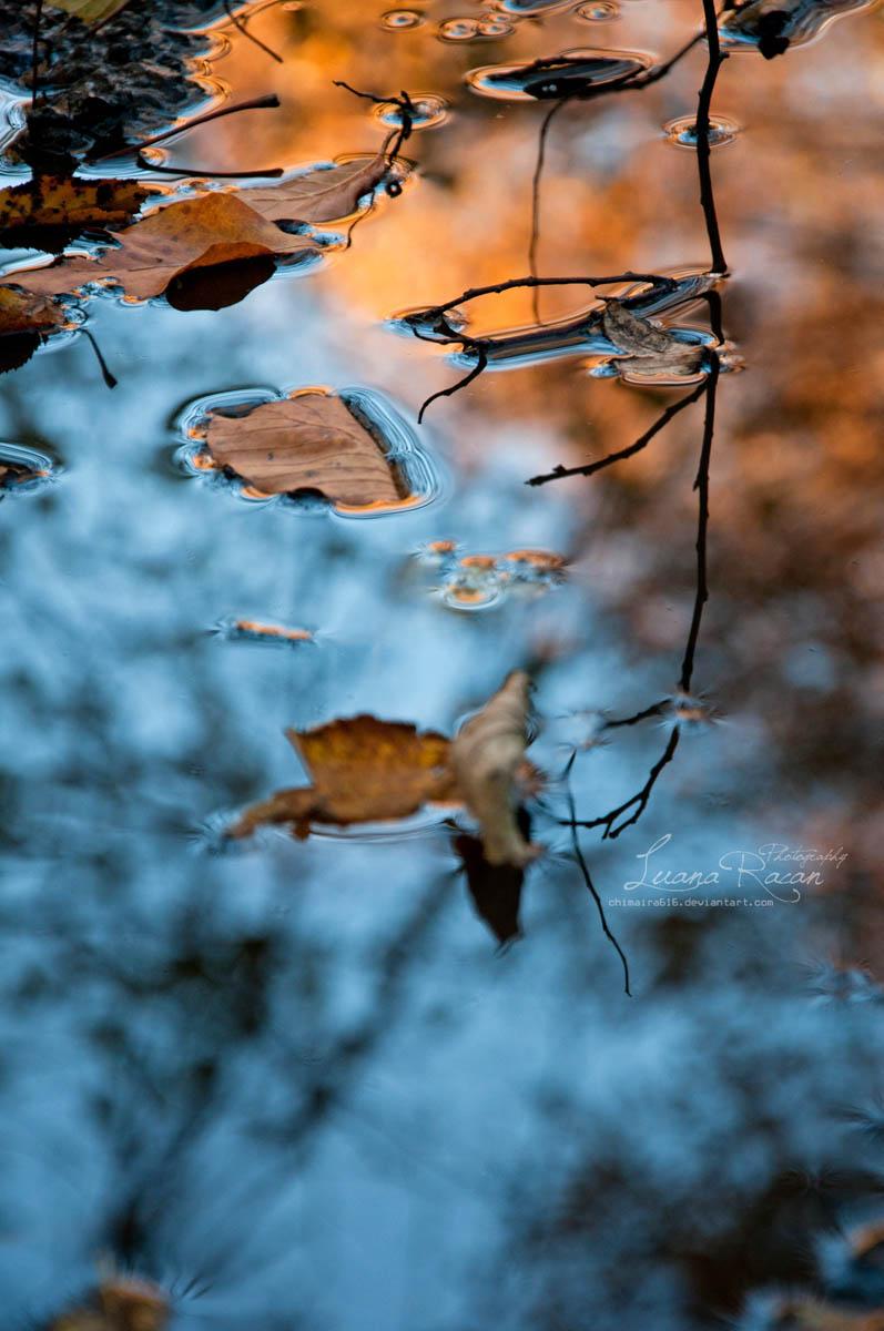 Orange/Blue by LuanaRPhotography