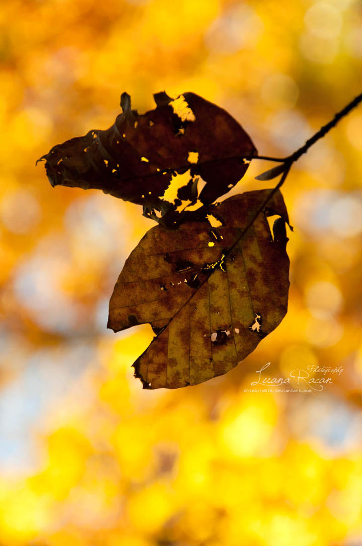 Orange/Yellow by LuanaRPhotography