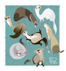 I Love Ferrets by IriusAbellatrix