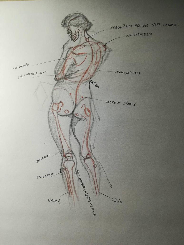 Anatomy study of female figure by Andrix9743