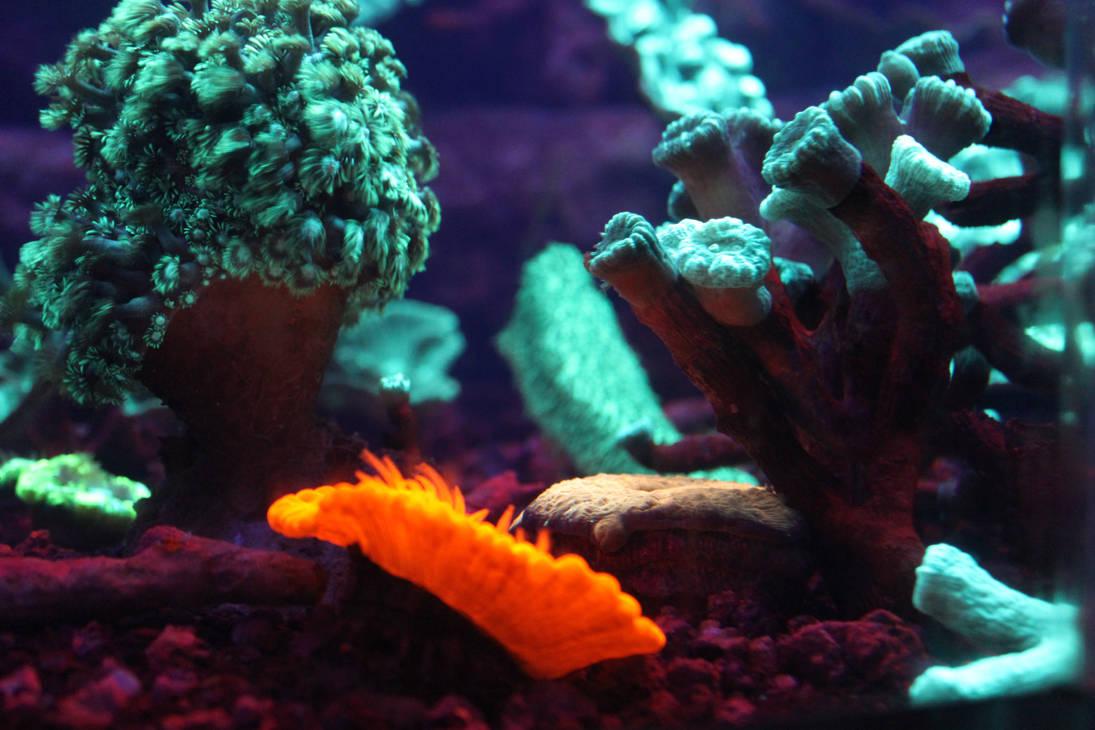 Uv Coral