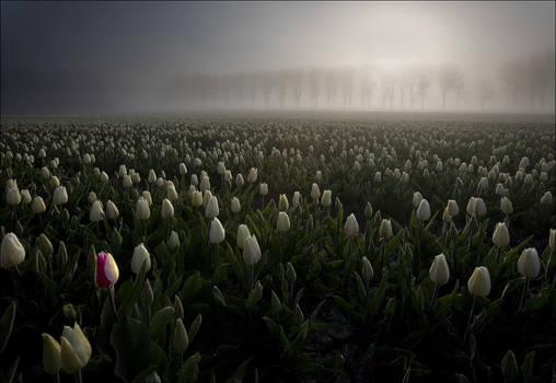 Netherlands 8