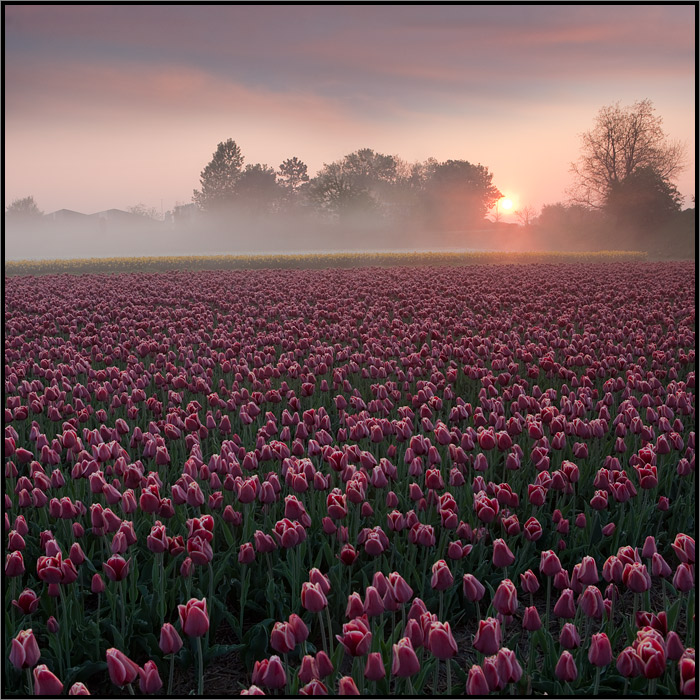 Netherlands 10