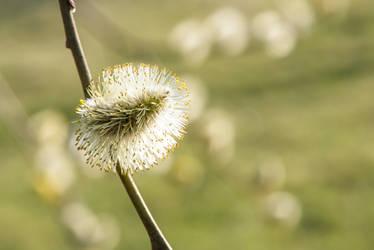 Spring tree-12 by Dashka-bird