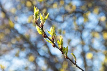 Spring tree-13 by Dashka-bird