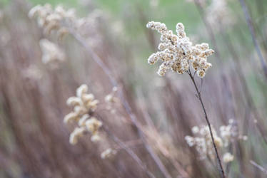 Spring panicles-01 by Dashka-bird