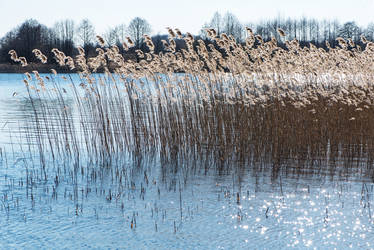 Spring panicles-02 by Dashka-bird
