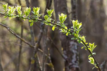 Spring-light-07 by Dashka-bird