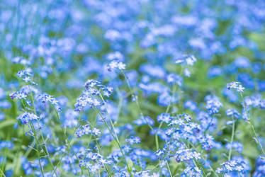 Blue by Dashka-bird