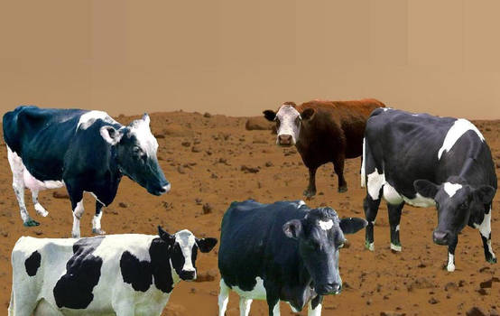 Cows from Mars
